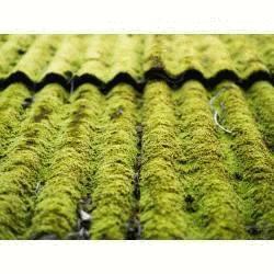 Faire son anti dépôts verts et verdissures maison - Pack Toutpratique - traite 500m²