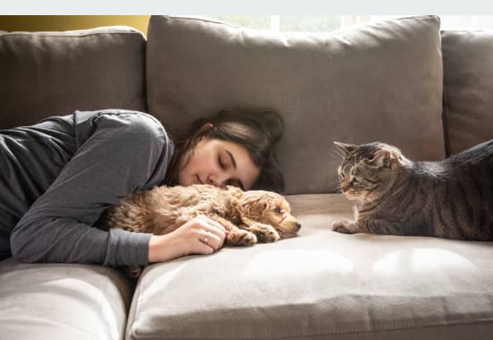 faut-il assurer chien et chat ?