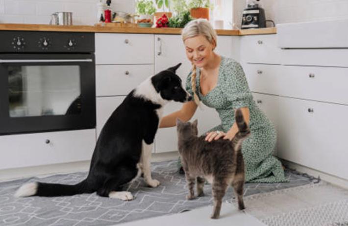 comment faire pour soigner chat et chien sans argent