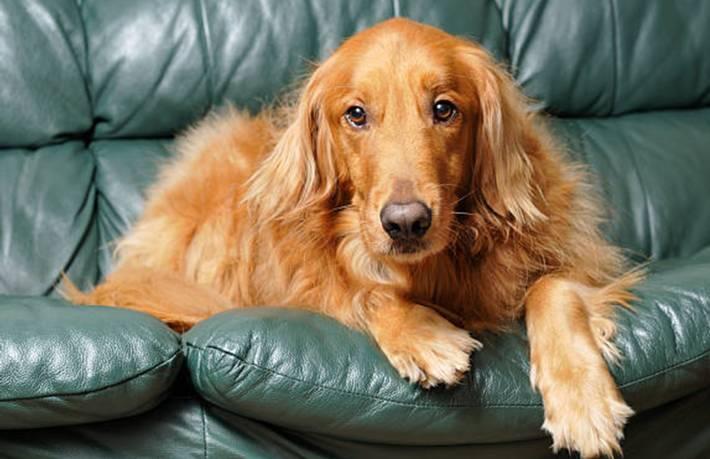 comment enlever une mauvaise odeur sur un canapé cuir