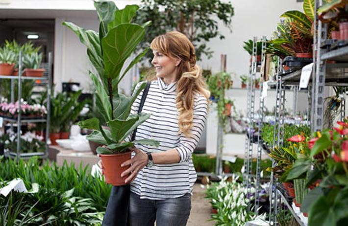 comment choisir une belle plante en bonne santé