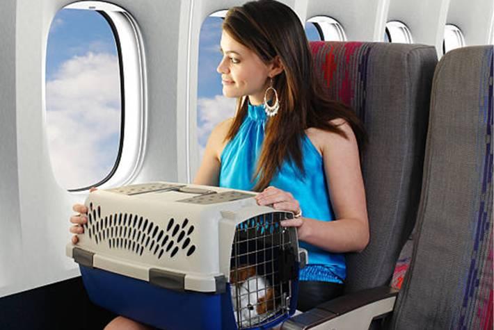 prendre l'avion, le train ou la voiture avec un chat