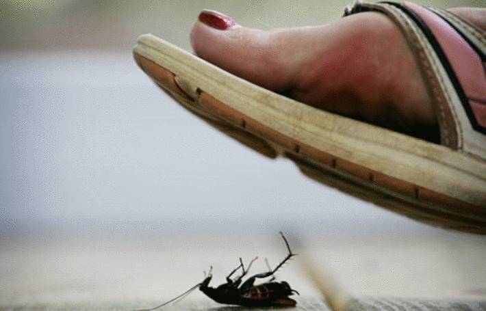 un pied chaussé de sandale va écraser une blatte