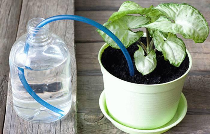 comment faire pour arroser plantes pendant vacances