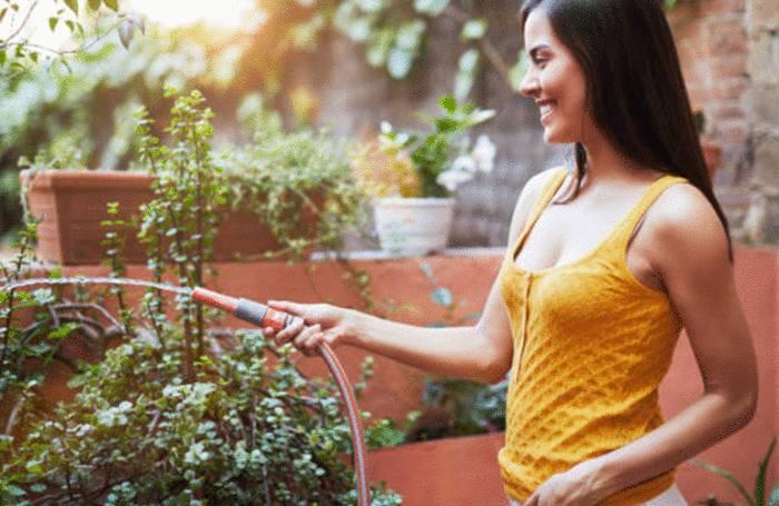 quelle astuce pour bien arroser les plantes