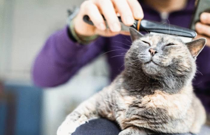comment bien prendre soin de son chat