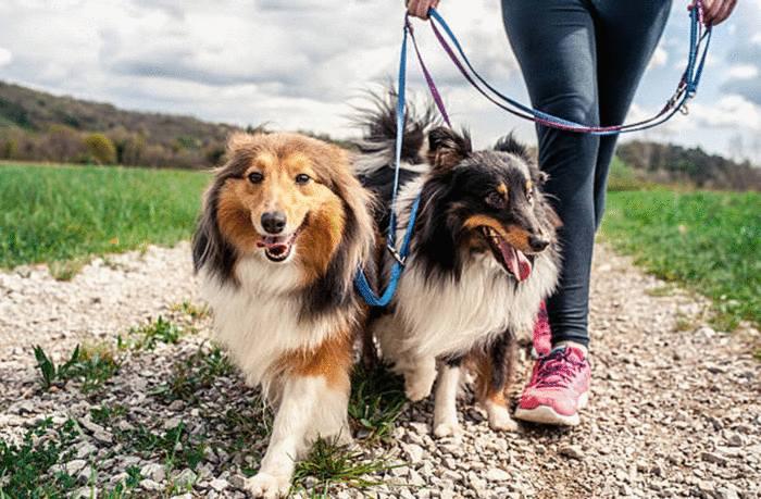 garde de chien accident qui est responsable