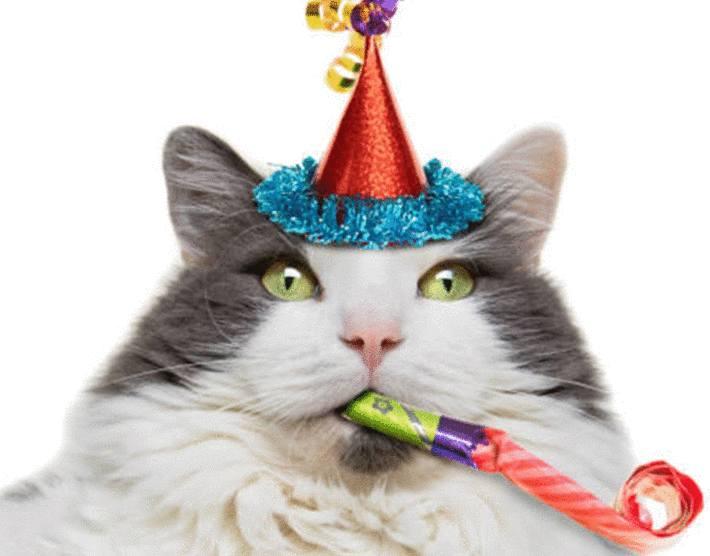 quel age a mon chat en age humain