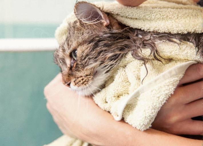comment laver son chat
