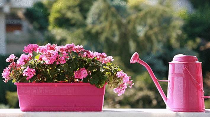 comment prendre soin plantes sur le balcon