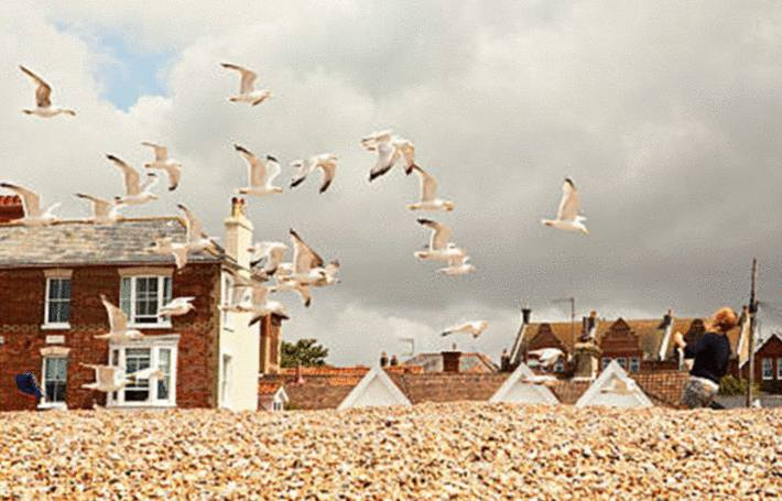 goelands qui volent au dessus des maisons