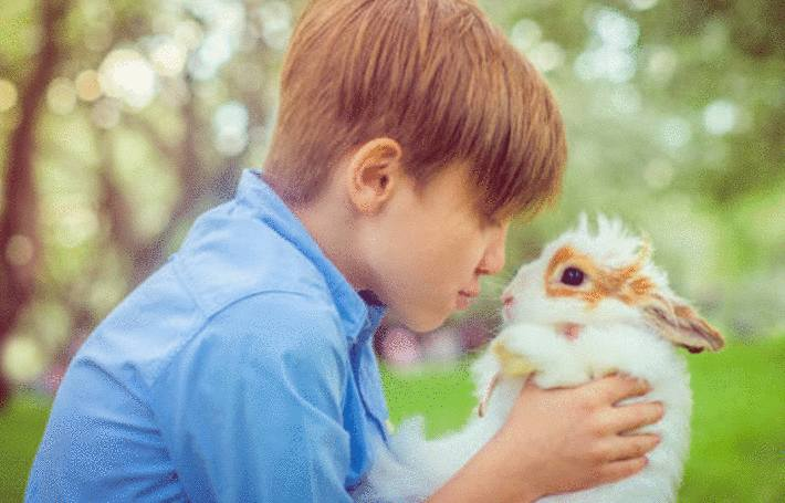 comment prendre soin d'un lapin