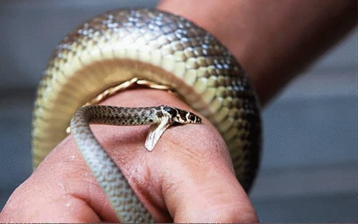 morsure serpent que faire
