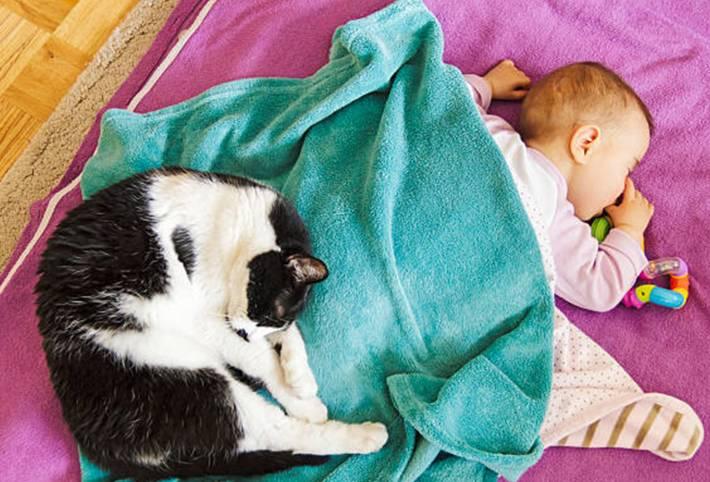 bébé et chat comment faciliter leur rencontre