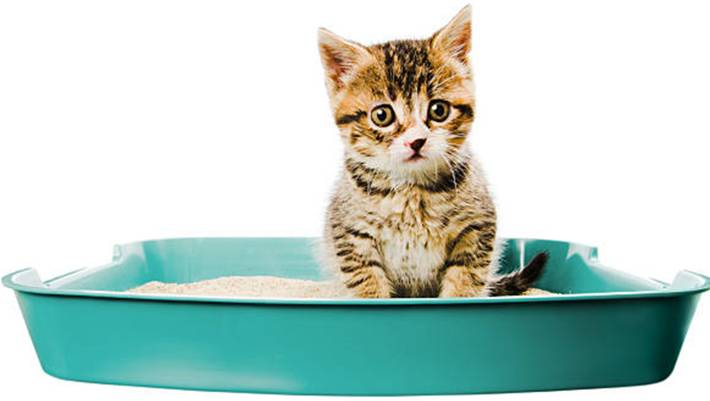 comment nettoyer et enlever odeur litière chat