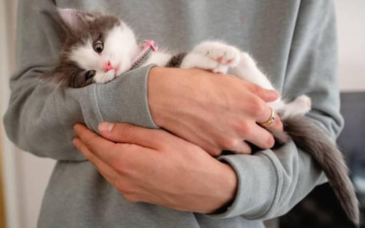 comment prendre soin d'un chat