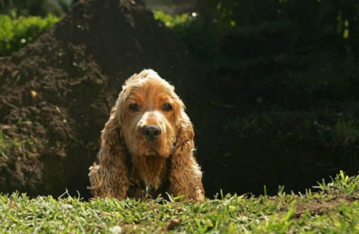 comment empecher un chien de creuser un trou dans le jardin
