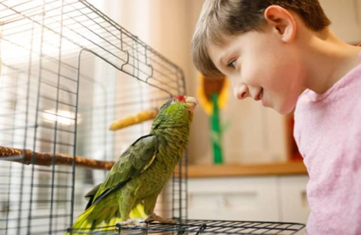 comment prendre soin d'un oiseau