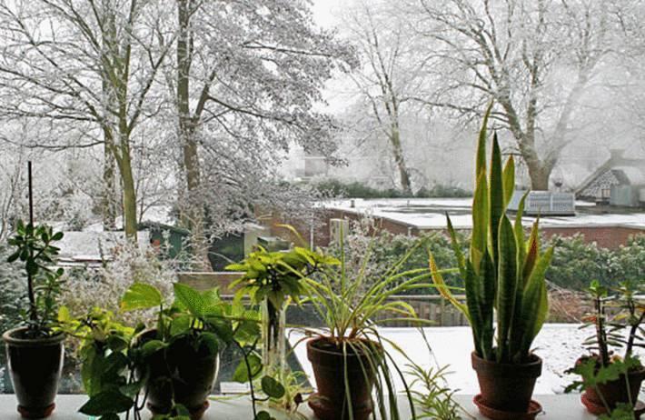 les plantes qui ne supportent pas le froid et qu'il faut rentrer