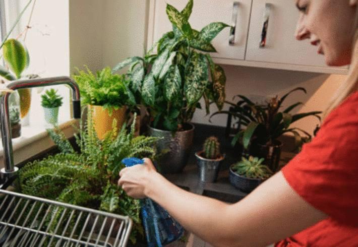 soigner plantes en pot