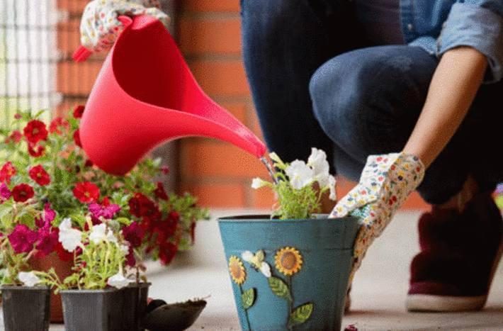 comment arroser une plante d'intérieur