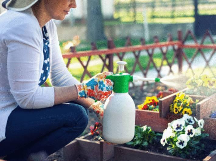 astuce pour se débarrasser des punaises à la maison ou au jardina