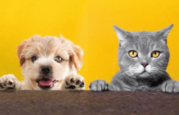 sur fond abricot chat et chien attendent d'être traités contre les puces