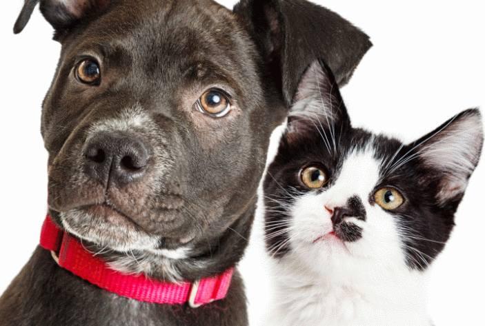 calculer l'age du chien et du chat