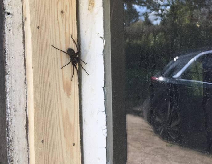 astuces pour se débarrasser des araignées