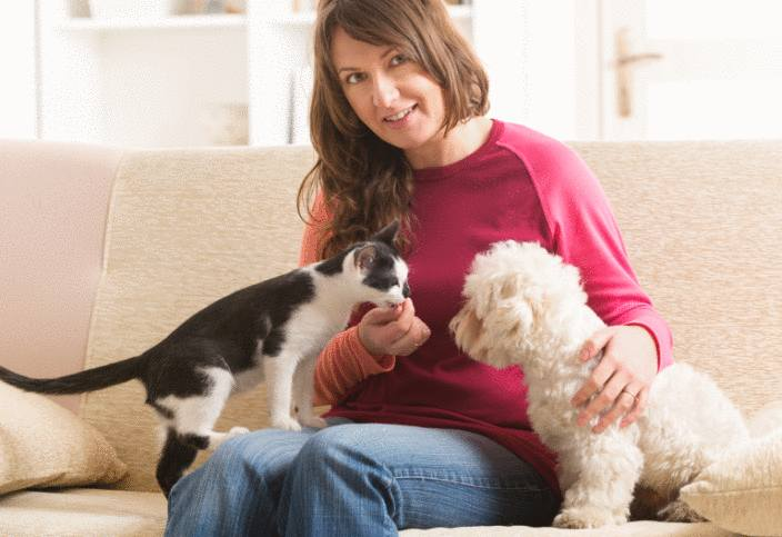 qui est responsable du chien ou du chat en cas d'accident