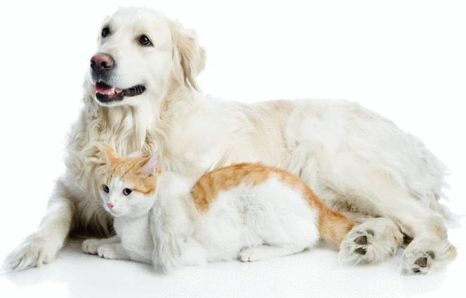 astuce pour enlever les poils de chat ou de chien