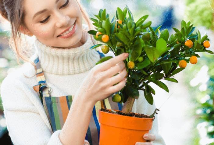 comment faire pousser des fruits