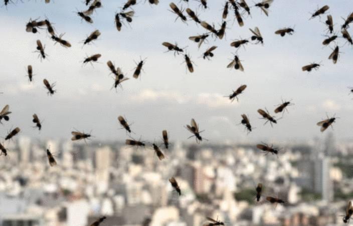 comment se débarrasser des fourmis volantes