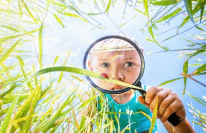 garçon-observant-une-coccinelle-à-la-loupe-sur-l'-herbe