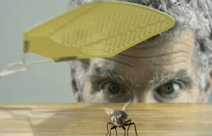 mouche - comment se débarrasser des mouches