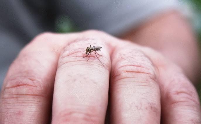 remèdes naturels anti moustique