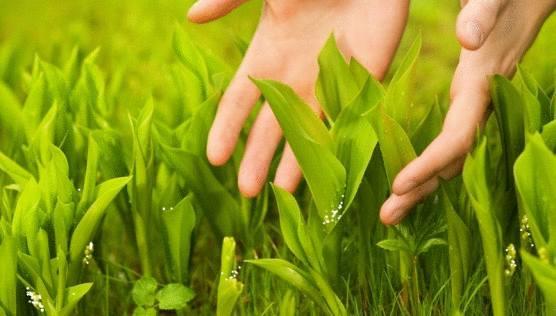 planter le muguet