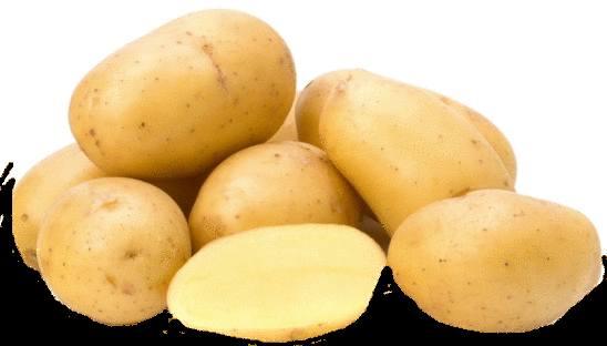 pomme de terre propriétés