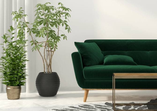 idee deco salon des plantes pour le salon