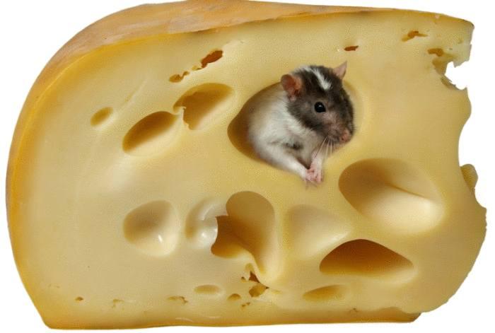 astuce pour se débarrasser des rats et souris
