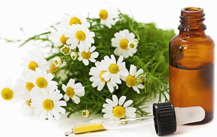 des fleurs de camomille à coté d'un flacon d'huile essentielle de camomille