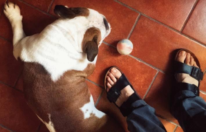 sur un sol tomettes des pieds en tong à coté d'un chien
